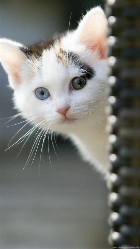 Sweet Animals Wallpaper - sweet cat animals cats kitten cats wallpapers