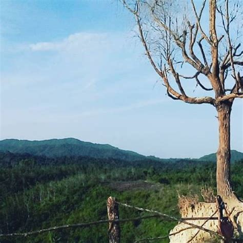 lokasi  alamat pohon jomblo solok sumbar spot selfie