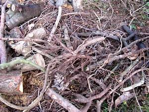 Asseln Im Garten : was ist totholz der gartenratgeber ~ Lizthompson.info Haus und Dekorationen