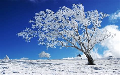Beautiful Background Winter, Snow, Tree Hd Wallpaper ...