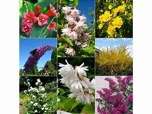 Pflanzen Bei Lidl : bl tenstr ucher sortiment 8 verschiedene pflanzen lidl ~ A.2002-acura-tl-radio.info Haus und Dekorationen