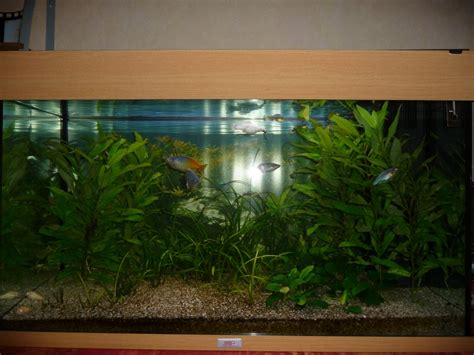 aquarium occasion le bon coin