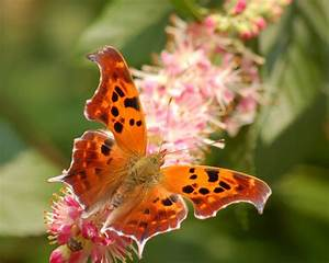 12 Rare-Sighted And Appealing Butterfly Species | Know UR ...