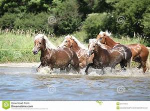 Batch Of Chestnut Horses Running In Water Stock Image ...