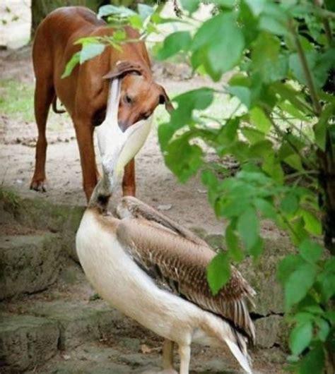 when birds attack