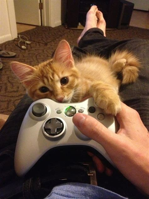 caterville gamer cats xbox