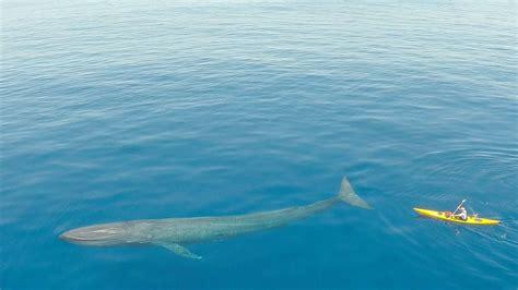 duenyanin en bueyuek hayvani mavi balina onediocom