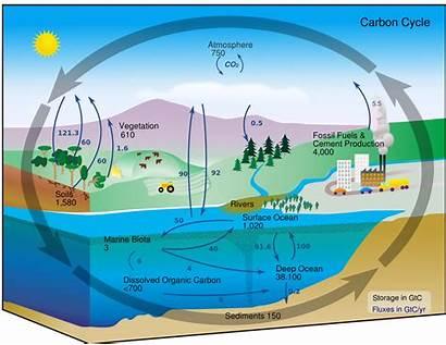 Diagrams Deforestation