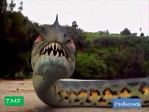 Pirañaconda - YouTube