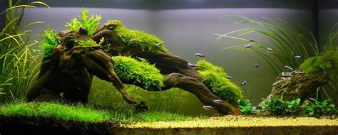 aquascaping with driftwood simon s aquascape