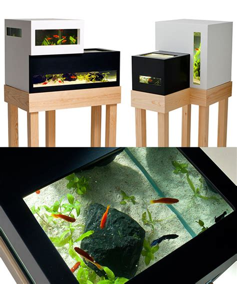 creative ways  raise fish   home design swan