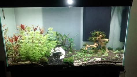 algue dans mon aquarium forum aquarium