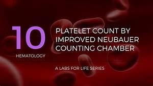 Platelet Count By Improved Neubauer Counting Chamber