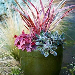 Unique container gardens for any yard - SFGate