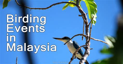 birding events in malaysia malaysia asia