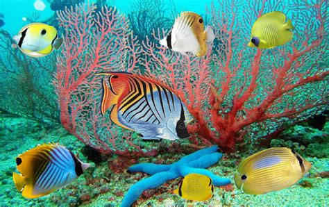Animated Moving Fish Wallpapers - animated fish wallpaper with 61 items