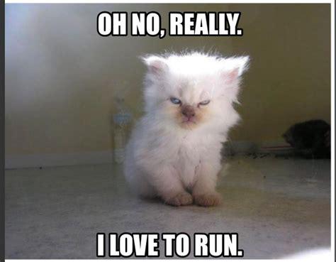 Cat Gym Meme - fitness funny fitness meme angry cat i hate running i love running funny animals