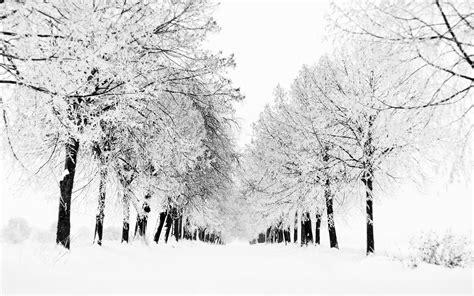 winter winter wallpaper view snow blizzard trees nature