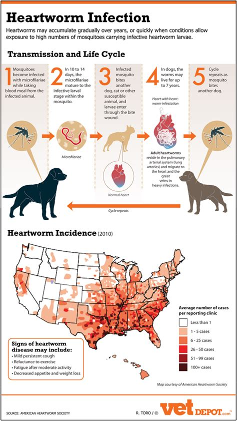 The Dangers Of Heartworm Infection  Infographic. Sickle Cell Signs Of Stroke. Fury Signs. Drug Use Signs. Isolation Room Signs. Pastry Signs Of Stroke. Companion Signs. Rattlesnake Signs. Wet Floor Signs Of Stroke