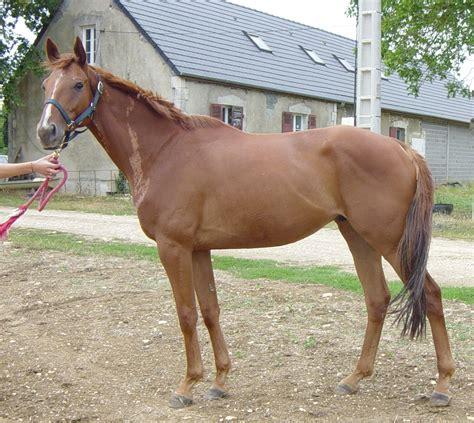 acheter un canapé en belgique achetez bien votre cheval achat vente chevaux poneys
