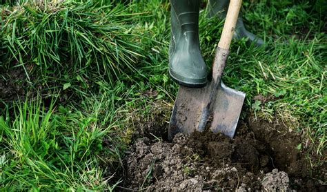 Burial Backyard by How To Bury A Legally When Your Canine Companion