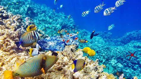 Wallpaper Hd Quality Underwater World Ocean Coral Reef