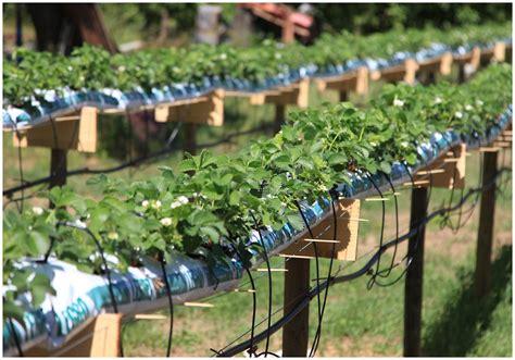 erdbeeren im rohr bauanleitung erdbeeren im rohr erdbeeren in rohr erdbeeren im rohr vertikal oder horizontal