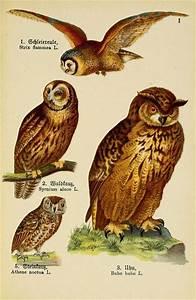Vintage Owl Illustration | www.pixshark.com - Images ...