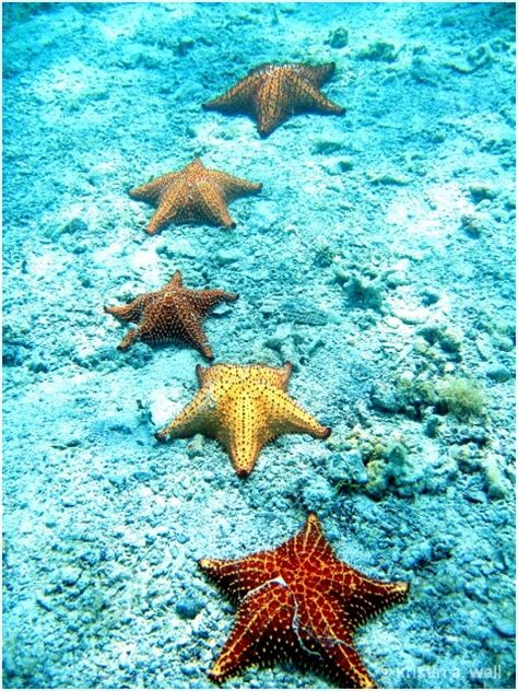 awesome starfish collection  pics part  top