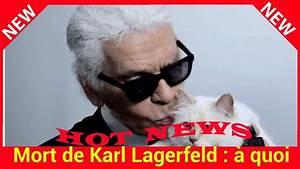 Choupette Chat Karl : mort de karl lagerfeld quoi ressemblait la vie de choupette son chat ador youtube ~ Medecine-chirurgie-esthetiques.com Avis de Voitures