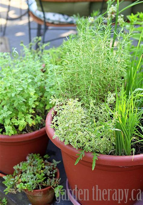 Grow Your Own Perennial Herb Container Garden  Garden Therapy