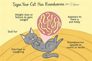 Why Do Cats Get Worms and How To Get Rid Of Them - Bossy Paws