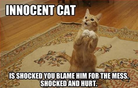 Random Cat Meme - how dare you accuse me cat memes pinterest cat