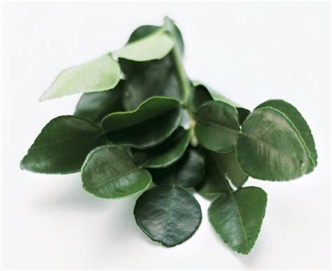 kaffir lime leaves kaffir lime