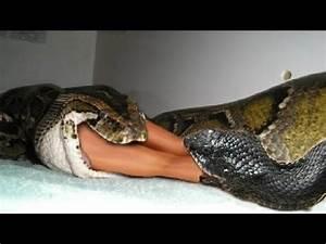 GIANT ANACONDA ATTACK HUMAN   Most amazing wild animal ...