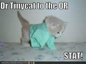 doctor cat photo album doctor cat