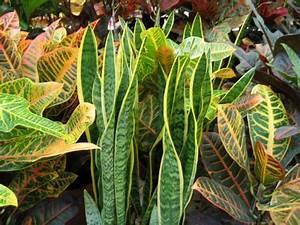 Plante Suspendue Intérieur : plantes d 39 int rieur ~ Teatrodelosmanantiales.com Idées de Décoration