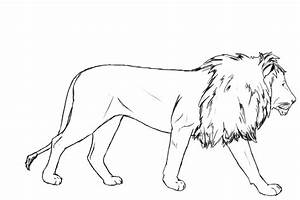 Drawing Pictures: Lion Drawing Pictures