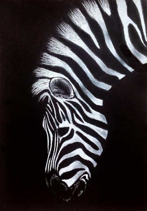 zebra drawing  black paper black paper drawing