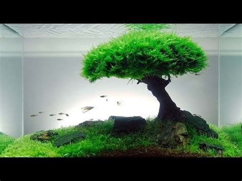 iwagumi aquascape aquascape iwagumi styles