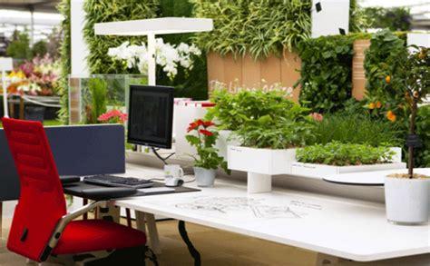plante de bureau plante de bureau lifeimprover traditionel evergreen