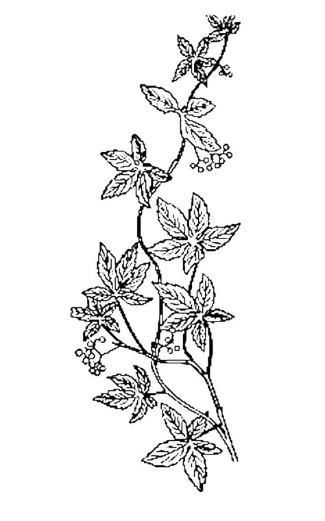 Free Flowers Line Cliparts, Download Free Clip Art, Free