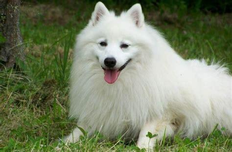 japan spicc kutyakoezpont