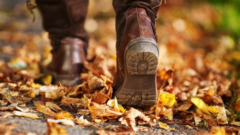 best fall activities the best activities for the fall season state by state homes com