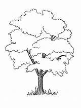 Coloring Trees Pages Tree Drawing Oak Baobab Printable Deciduous Nature Getdrawings Coniferous Contains Fruit Section Both sketch template