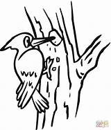 Woodpecker Coloring Clipart Pages Clip Bird Colouring Sheet Birds Preschool Sheets Woody Hole Cliparts Animals Printable Clipground Worksheets Kindergarten Tree sketch template
