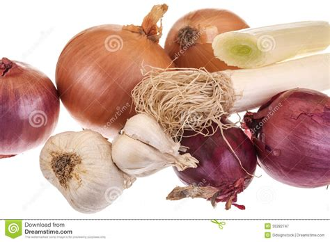 types of onions different types of onions royalty free stock photography image 35282747