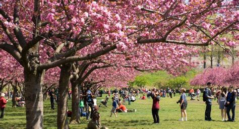 botanical garden cherry blossom botanic garden review fodor s travel