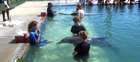 Freeport Dolphin Trainer For A Day