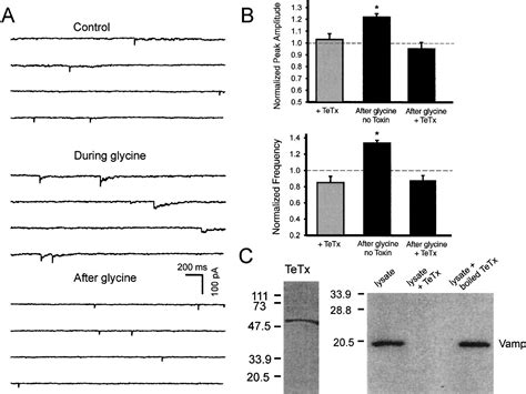 Full Form Of Nmda by Activation Of Synaptic Nmda Receptors Induces Membrane
